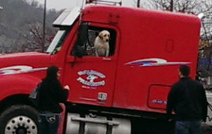 dog driving semi truck